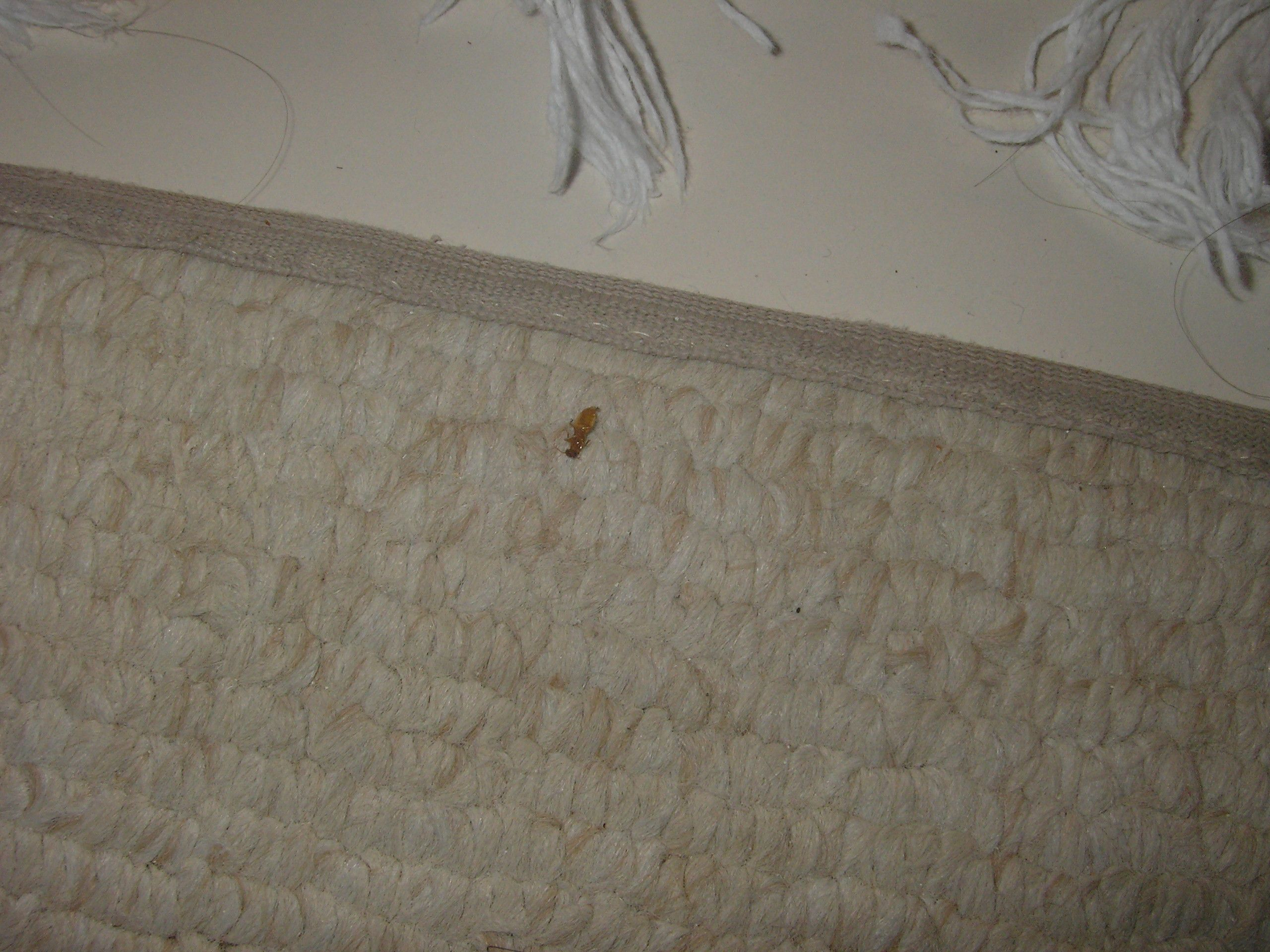 Help I Stayed At A Place That Has Bed Bugs